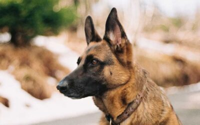 """As melhores e """"piores"""" raças de cães para segurança da sua casa"""